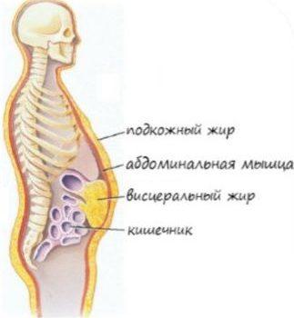 Типы жира в организме человека